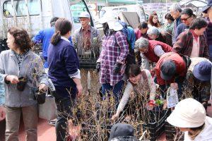町を応援、ブルーベリー苗木が届く