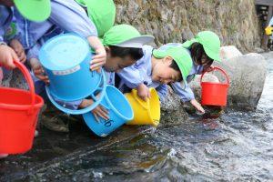 岩泉町・3年ぶりにサケ稚魚放流事業を開催