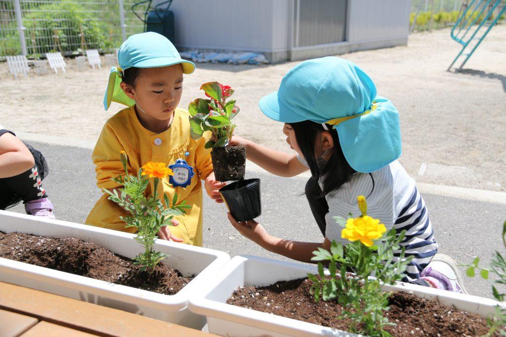 岩泉町・「大きく育ってね」園児が花で思いやりの気持ちを ...